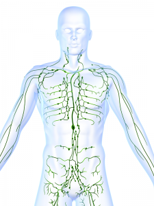 Lymphatic system showing lymph nodes of a human body.