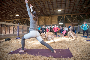 """Mallory Wisniewski is a certified yoga instructor who teaches yoga at Elevate Fitness in Syracuse. She is also one of the area instructors who leads goat yoga classes at Purpose Farm in Baldwinsville. """"It's beautiful how friendly the animals are,"""" Wisniewski said."""