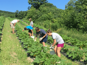 Youth from the St. Charles-St. Ann's Youth Ministry Group volunteering at Matthew 25 Farm. photo provided.