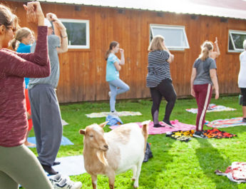About 30 people gather each month — from spring to fall — at Purpose Farm, an 11-acre property nestled alongside the Seneca River in Baldwinsville. They practice yoga while mingling with goats and other animals. Photos by Payne Horning.